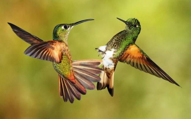 photos-of-hummingbird-01.jpg
