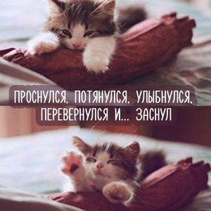 Картинки прикольные открытки с добрым утром с котиком