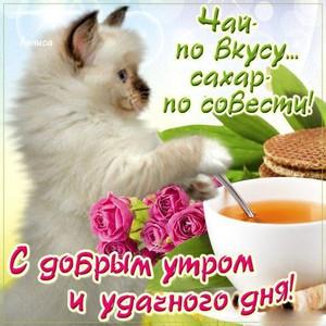 Картинки доброго дня красивые с добрым утром с кошкой