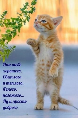 dobrogoutra_ru_4462.jpg