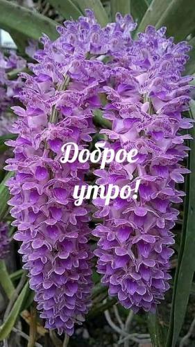 textopics_ru_26504.jpg