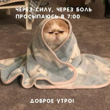 dobrogoutra_ru_3026.jpg