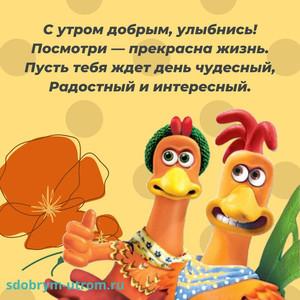Картинки прикольные открытки с добрым утром Смешная открытка с курицами