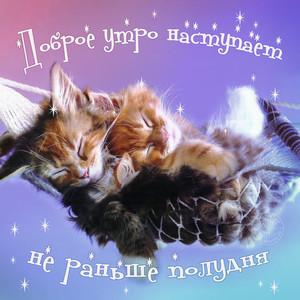 Картинки прикольные открытки с добрым утром с котятами