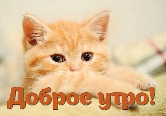 dobrogoutra_ru_160.jpg