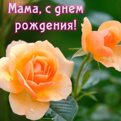Мама-с-днем-рождения.png