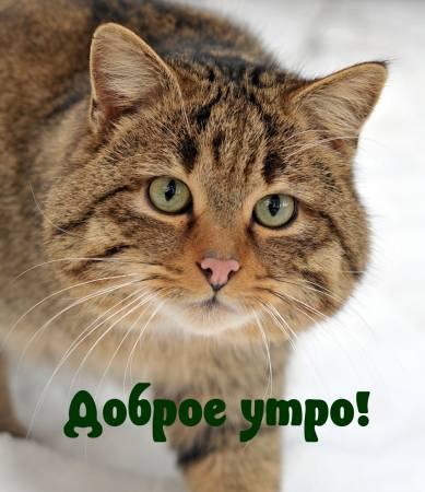 dobrogoutra_ru_3316.jpg